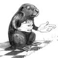 BeaverHandsThumb