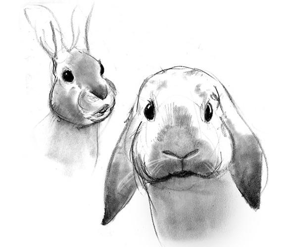 rabbit560