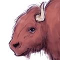 story_elves_buffalo_zebra_kangaroo_thumb